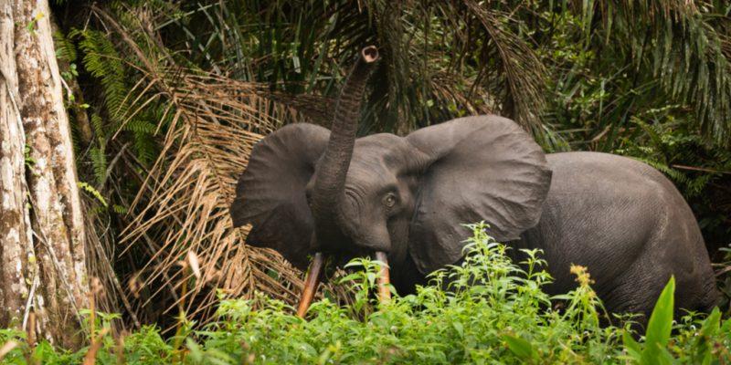 CONGO : mise en place d'une plateforme de gestion des ressources naturelles de l'ETIC ©Shutterranger/Shutterstock