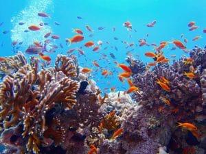 SEYCHELLES: 30% territorial waters declared marine protected areas©Tunatura/Shutterstock