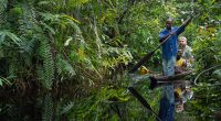 CONGO : la concession forestière de Mimbeli-Ibenga est désormais certifiée 100 % FSC©Sergey Uryadnikov/Shutterstock