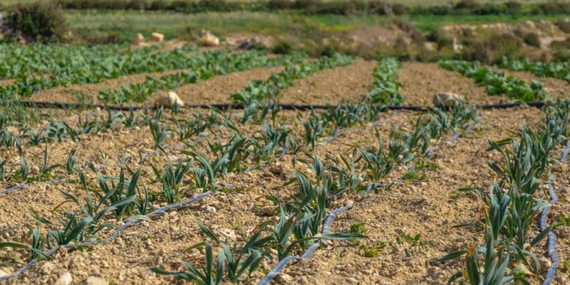 EGYPT: $11.6 million to upgrade several irrigation systems in the north of the country©tetiana_u/Shutterstock