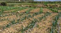 ÉGYPTE : 11,6 millions de dollars pour moderniser plusieurs systèmes d'irrigation dans le nord du pays©tetiana_u/Shutterstock