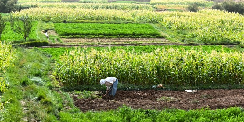 MOROCCO: AFD grants €1.5M to Morrocan agricultural bank for sustainable agriculture©monticello / Shutterstock