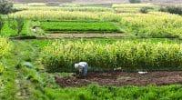 MAROC : l'AFD accorde 1,5 M€ au Crédit agricole du Maroc pour l'agriculture durable©monticello / Shutterstock