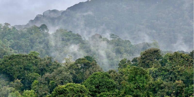 UGANDA: IDA provides $78 million for forest preservation and development©Kiki Dohmeier/Shutterstock