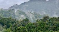 OUGANDA : l'IDA accorde 78 M$ pour la préservation et la mise en valeur des forêts©Kiki Dohmeier/Shutterstock