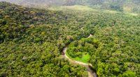 GABON : l'État soutient la préservation de 30 % de la biodiversité mondiale d'ici 2030©Gustavo Frazao/Shutterstock