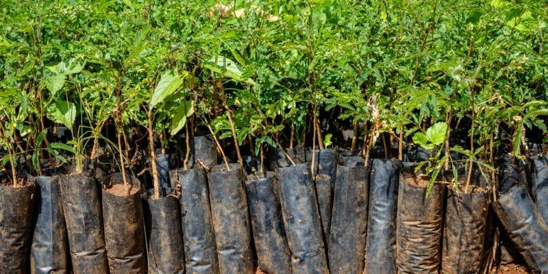 RWANDA-KENYA: One Tree Planted supports farmers by planting 80,000 trees©Dennis Wegewijs / Shutterstock