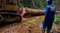 CAMEROUN : un projet de concessions forestières dans la forêt d'Ebo divise©TOWANDA1961 / Shutterstock