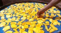 BÉNIN : des séchoirs solaires hybrides révolutionnent le secteur de l'agroalimentaire©Bolivia IntiSud Soleil