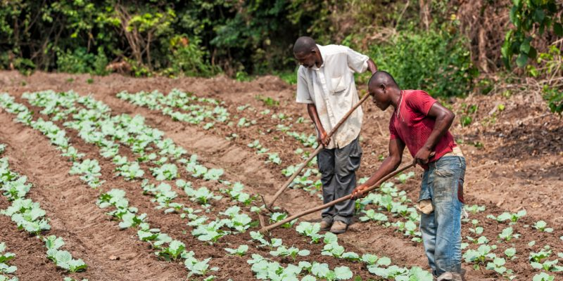 AFRICA: Trees for the Future will train 8,000 farmers in soil management ©Andre Silva Pinto / Shutterstock