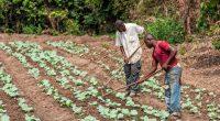 AFRIQUE : Trees for the Future forme 8000 agriculteurs à la bonne gestion des sols©Andre Silva Pinto / Shutterstock