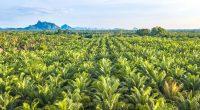 """CAMEROON: """"Camvert"""" palm grove project offers environmental guarantees ©apiguide/Shutterstock"""