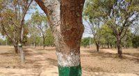KENYA : l'État réitère son ambition de planter 1,8 milliard d'arbres d'ici à 2022 ©Abdullahi/Shutterstock