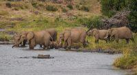 ZIMBABWE: Rehabilitate Bulilima Dam to reduce human-wildlife conflict©WildSnap/Shutterstock
