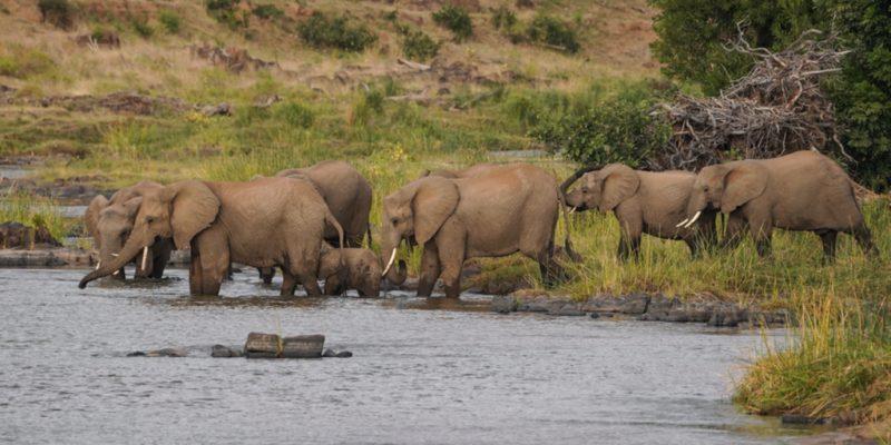 ZIMBABWE : réhabiliter le barrage de Bulilima pour réduire le conflit homme-faune©WildSnap/Shutterstock