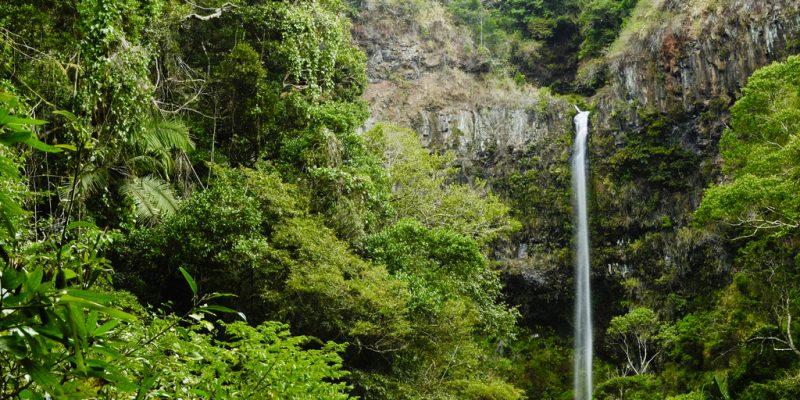 MADAGASCAR : l'Usaid et McCormick octroient 3 M$ à la conservation de la biodiversité©Hajakely / Shutterstock