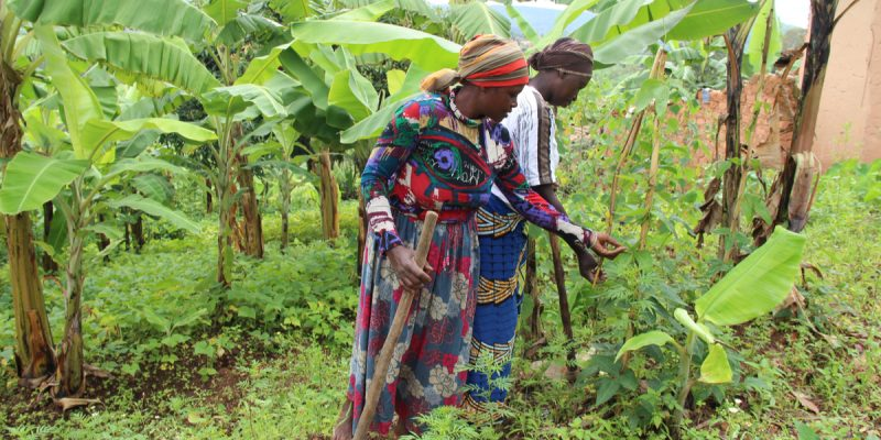 TCHAD : l'Unesco lance le projet Biopalt (Biosphère et patrimoine du Lac Tchad)©Sarine Arslanian/Shutterstock