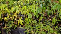 AFRICA: Miss Earth Nigeria 2019, Susan Garland aims to plant a million trees©Dennis Wegewijs/Shutterstock
