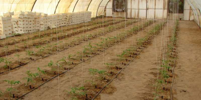 "TUNISIA: ""Underground diffuser"", innovation that saves 100% of irrigated water©Chahtech SA"