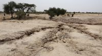 SENEGAL: 34% of arable lands threatened by desertification ©BOULENGER Xavier/Shutterstock
