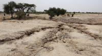 SÉNÉGAL : la désertification menace 34 % des terres arables ©BOULENGER Xavier/Shutterstock