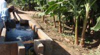 UGANDA: US$169.2 million from IDA for irrigation in response to climate emergency©BOULENGER Xavier/Shutterstock