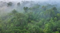 KENYA: $1.5 million EU grant for Maragoli Forest conservation©CherylRamalho/Shutterstock