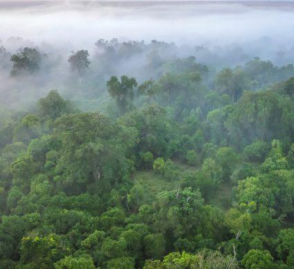 KENYA: $1.5 million EU grant for Maragoli Forest conservation©CherylRamalho/Shutterstock