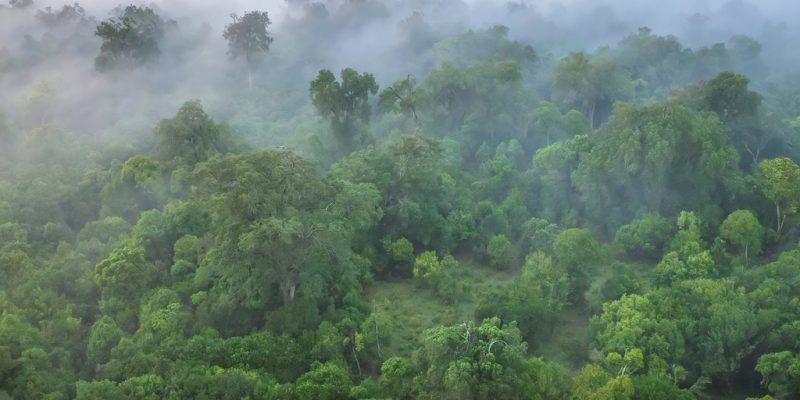 KENYA : une subvention de 1,5 M$ de l'UE pour la conservation de la forêt de Maragoli ©CherylRamalho/Shutterstock