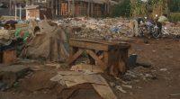 CONGO BRAZZA : le plan national d'action pour l'environnement est en cour révision©Scarabea/Shutterstock