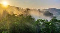 CONGO BRAZZA : péril sur le projet de création de l'aire protégée de Messok-Dja©BorneoRimbawan/Shutterstock