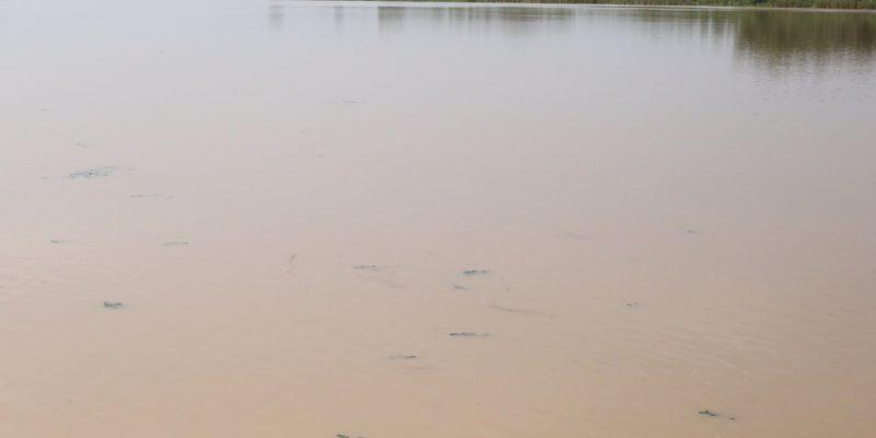 SÉNÉGAL-MALI : CMEC va construire le barrage hydroélectrique de Gourbassi©BOULENGER Xavier /Shutterstock