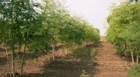 BURKINA FASO: Agroforestry to empower the people of Réo ©Alchemist from India/Shutterstock