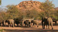 NAMIBIE : le gouvernement alloue 12 M$ dans la gestion de la faune et de la flore©Casper and Cindy / Shutterstock