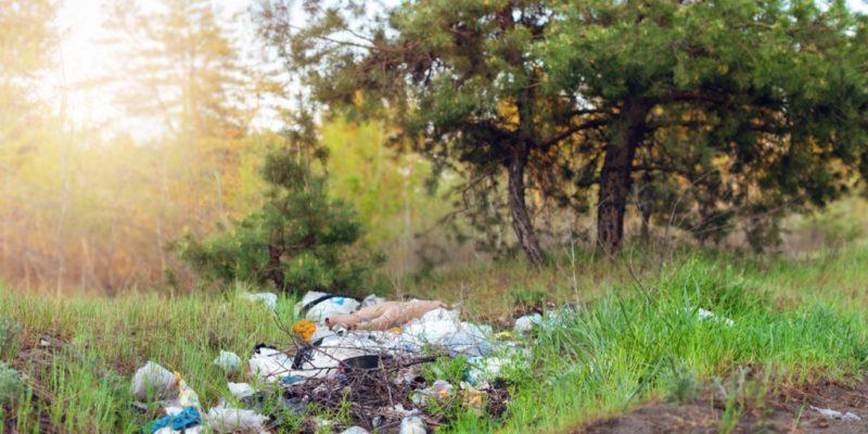 KENYA : le gouvernement interdit le plastique dans ses réserves forestières©Oksana Klymenko/Shutterstock