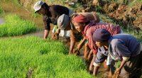 AFRIQUE : le FEM renforce les systèmes alimentaires durables de 9 pays du continent©Pierre Jean Durieu/Shutterstock