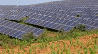 ZIMBABWE: TSS to install 90 MW solar power plant in Chiredzi©chinahbzyg/Shutterstock