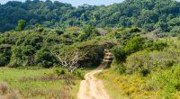 KENYA : Time rachète deux parcelles de forêt pour en préserver la biodiversité©Codegoni Daniele/Shutterstock