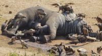 ÉTHIOPIE : les braconniers abattent six éléphants près du parc national de Mago ©Martina Wendt/Shutterstock