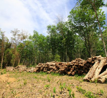 COTE D'IVOIRE: Sifca partners with government to restore forest cover©Rich Carey/ Shutterstock