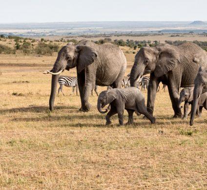 MALI: State approves project to extend Gourma Elephant Reserve©Tykhanskyi Viacheslav/Shutterstock