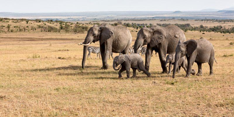 MALI : l'État adopte le projet d'extension de la réserve d'éléphants du Gourma©Tykhanskyi Viacheslav/Shutterstock