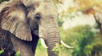AFRIQUE : consultation mondiale en vue du «New Big 5» des animaux terrestres ©Anna Om/Shutterstock