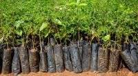 TOGO: Government to restore 35,000 hectares of forests©Dennis Wegewijs/Shutterstock