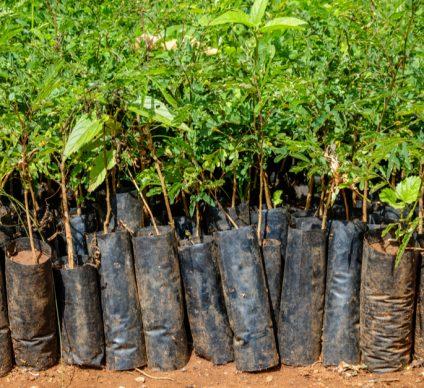 TOGO: Government to restore 35,000 hectares of forests©Dennis Wegewijs/Shutterstock