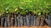 TOGO : le gouvernement annonce la restauration de 35000 hectares de forêts©Dennis Wegewijs/Shutterstock