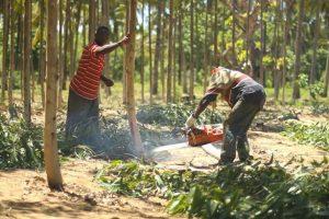 KENYA: Komaza raises $28 million to develop its forest plantations