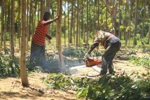 KENYA : Komaza lève 28 M$ pour développer ses plantations forestières©Komaza
