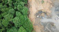 SENEGAL: Mbao Forest degradation project divides communities in Dakar©Rich Carey/Shutterstock