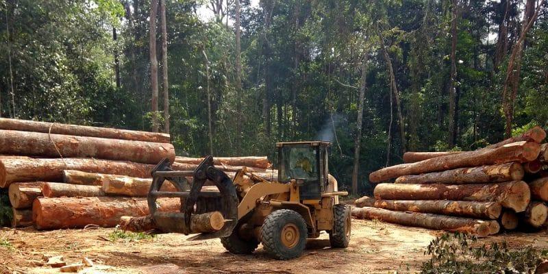 CAMEROUN : le gouvernement approuve l'exploitation industrielle de la forêt d'Ebo©Tarcisio Schnaider/Shutterstock